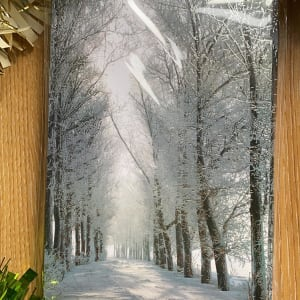 Sheffield Hospitals Charity Christmas Card - Snowy forest